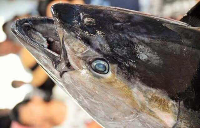 5 Best Sushi Restaurant in Toyosu Fish Market 2019
