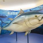 Attractiveness of the Toyosu market such as restaurants and tuna auctions