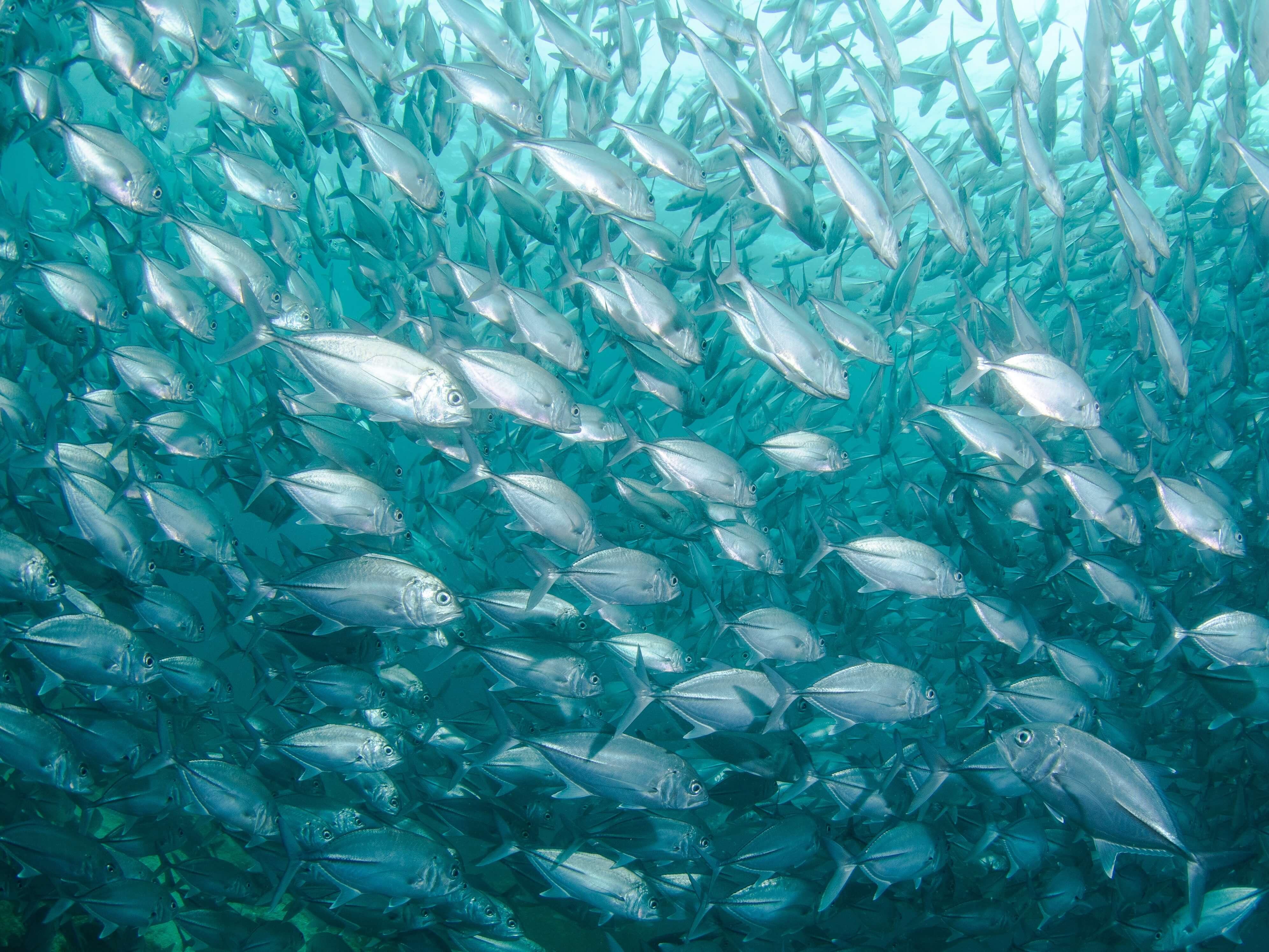 意外と知らない料理英語 ~第四弾: 冷凍の魚を解凍します!~